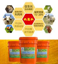 育肥牛饲料添加剂提高采食量