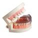 牙齿运动?;て?,牙科用牙齿?;て?,运动跆拳道篮球足球牙套,厂家直供,