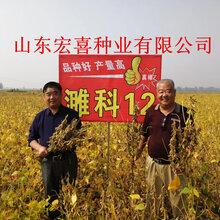最新高产大豆小麦新品种-山东宏喜种业种子研发繁育基地图片
