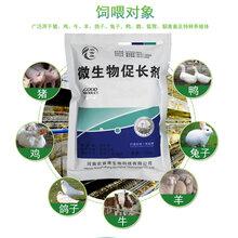 养猪催肥促长剂在哪能买到给猪增重益生菌图片