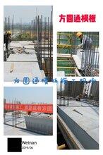 建筑模板1830×915×15价格价格查询