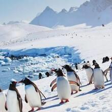 邮轮去南极探险?南极旅游探险安全吗?南极旅游攻略?怎么去南极?图片