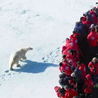 北极邮轮怎么去