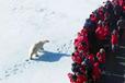 北极邮轮之旅,这个夏天的首选!环游北极圈的十四天邮轮之旅