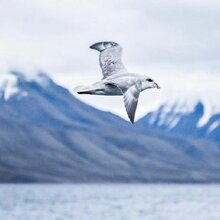 去北极旅行分享,北极邮轮旅游攻略,北极风景介绍,北极旅游胜地