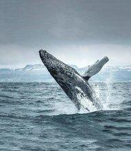 不容错过的极地旅行,南北极邮轮旅游探险,分享南北极旅游经验,极地邮轮旅游攻略