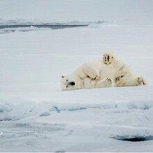 北极旅游提前准备,提前预定北极船票,北极旅游报团推荐图片
