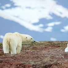 北极旅游攻略,北极邮轮旅游线路,怎么去北极旅游,预订北极邮轮