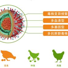 寶來利來替抗產品威達系列免疫微生態廠家招商圖片