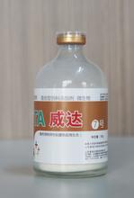 山東寶來利來預防家禽新城疫飲水型免疫微生態廠家火熱招商圖片