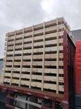 宁波钢带木箱加工定制图片0
