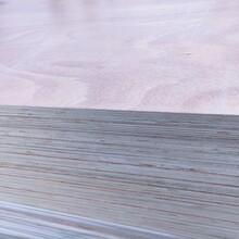 臨沂廠家直供膠合板楊木整芯板包裝箱用多層板圖片