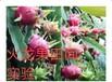 沈阳注册国内外公司400电话开通新博娱乐娱乐注册周到青州博创