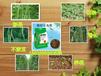 豆角肥生產豇豆蕓豆肥料廠家水溶豆滿園直銷