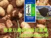 生物有機肥種類微生物菌劑生產生物有機肥批發