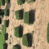 百慕大草坪(2块8一个平方)