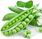 蔬菜供應商——宏鴻蔬菜配送