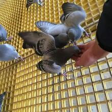 玻璃鋼走廊地板格柵—易清洗養殖格柵批發工廠圖片