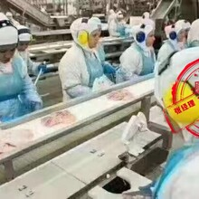 湖北荊門出國勞務歐美國家招塔吊挖掘機司機誠招代理圖片