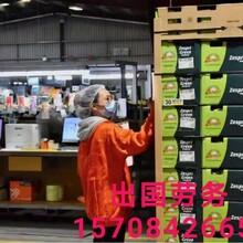 江西宜春出國打工以色列建筑工人紙箱廠司機普工年薪40萬圖片