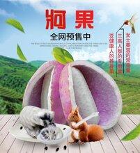 2.5kg箱装生鲜牁果(八月瓜)图片