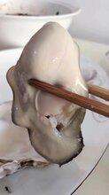 乳山生蠔牡蠣,規格全,肥度好,廠家直銷圖片