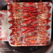 北京清水凍蝦批發廠家直銷圖片
