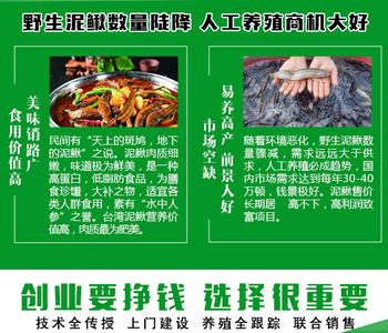 芜湖县六郎凤飞水产ag系列产品|官方家庭农场