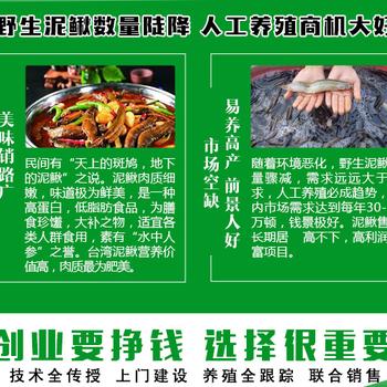 湖北荆州泥鳅倍投法建池需要多少钱青蛙倍投法技术指导