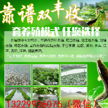 重庆南岸区倍投法泥鳅技术四川哪里有泥鳅倍投法大户