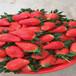 脱毒移栽越秀草莓苗越秀草莓苗基地批发销售