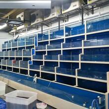 東莞海鮮池玻璃定制廠家圖片