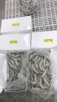 南美大虾100-110规格