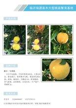 需冷量少的冬桃品種_晚熟桃樹新品種晚熟品種介紹