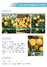 咸陽油桃樹苗新品種_咸陽桃樹苗種植