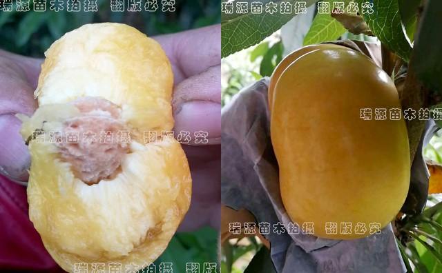 黄蟠桃的品种,蟠桃新品种,黄蟠桃的品种