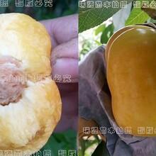 红油蟠桃品种,黄蟠桃品种,蟠桃苗批发图片