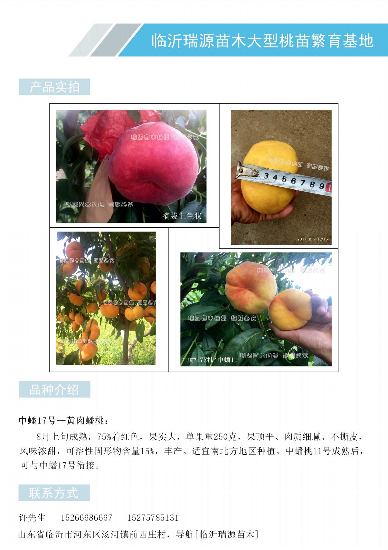 黄桃的新品种、蟠桃苗价格