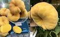浦江锦绣黄桃苗、桃树苗多少钱一棵、桃树苗多少钱一棵