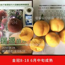 仲秋黃金脆桃多少錢圖片