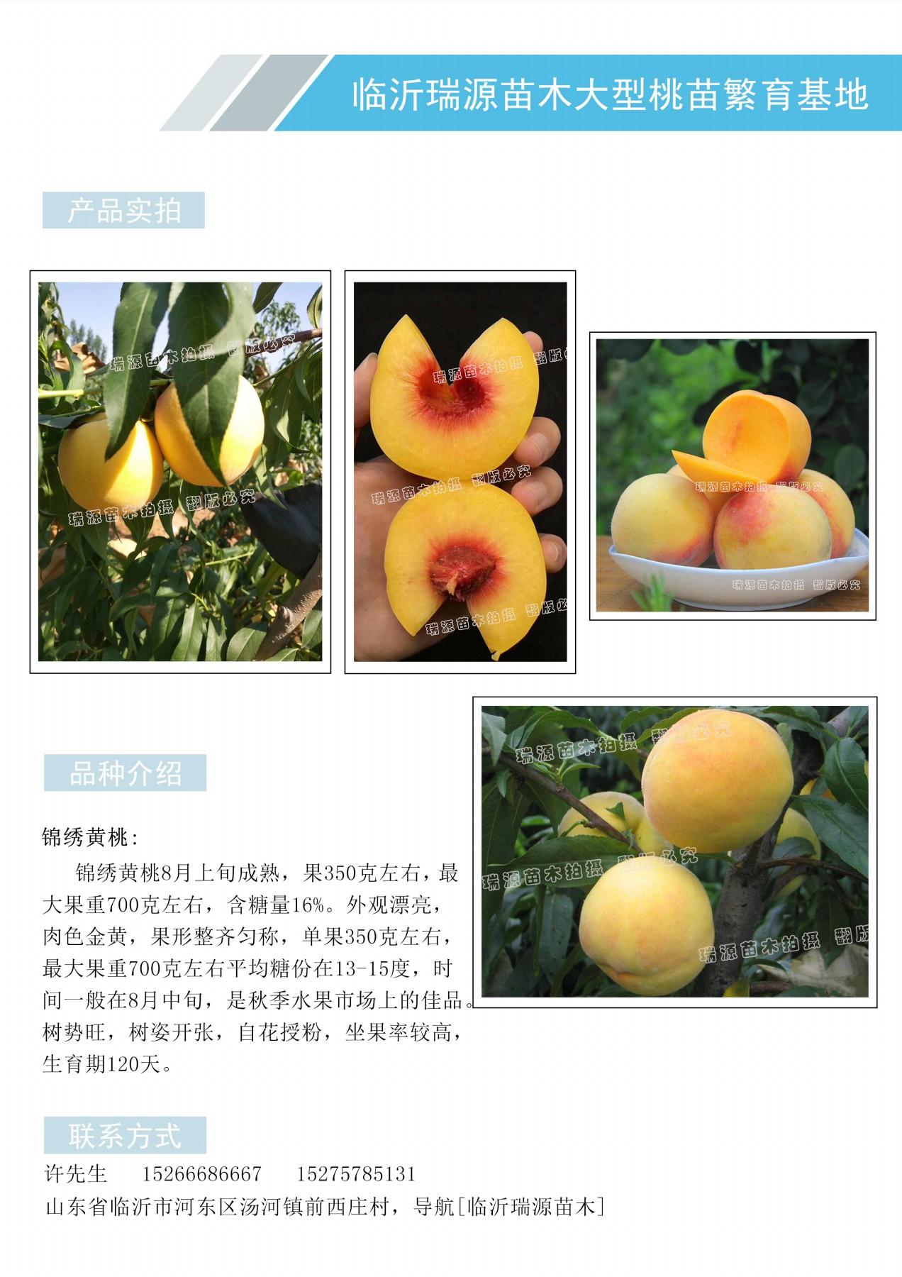 黄金蟠桃苗哪里有售_黄金蟠桃苗哪里有售桃树苗种植