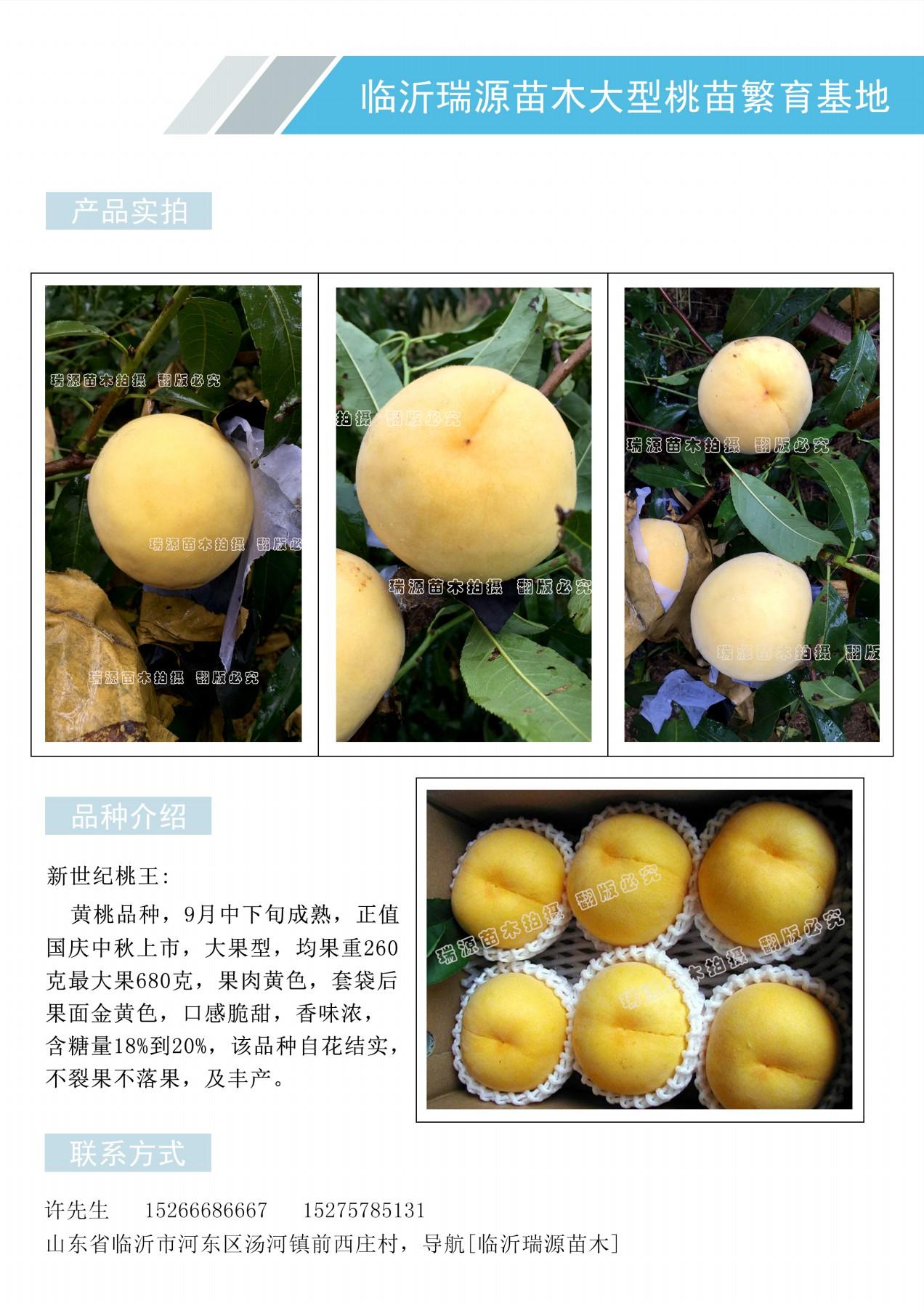 黄桃树苗出售_黄桃树苗出售哪里有卖
