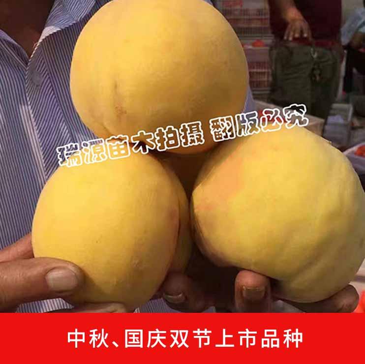 中早晚熟桃成熟期划分_山东晚熟冬桃