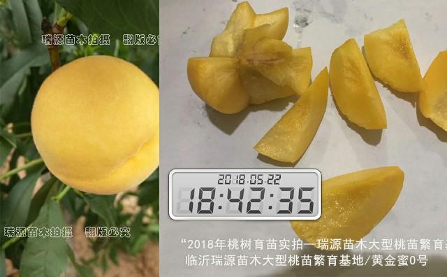 上海苗圃場黃桃苗_黃貴妃桃苗專業銷售