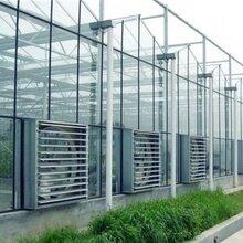 山东玻璃温室建设价格