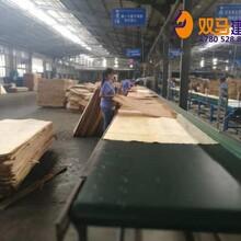 恩平市桉木建筑模板哪里生产图片