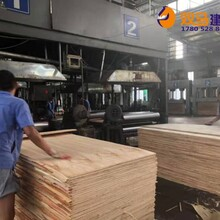 阳西县三胺胶建筑模板销售价格图片