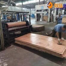 濮阳县清水建筑模板行情价格图片