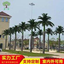 室内外游乐场装饰造景大王椰子树图片