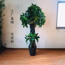 仿真植物发财树盆栽小盆景图片